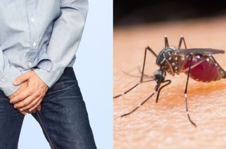 Man develops 'eggshell' around one of the testicles after a bite from a mosquito