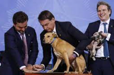 VIDEO: Dog Signs Law Against Animal Cruelty
